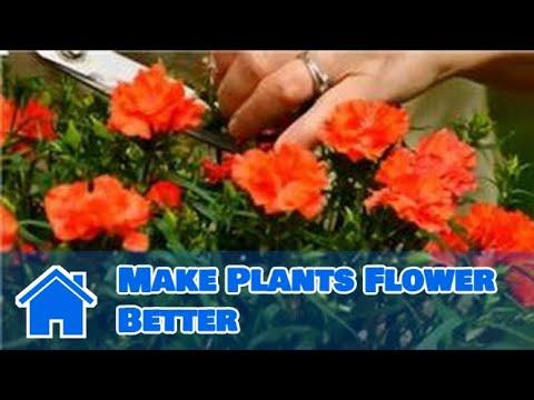 Flower Garden : How to Make Plants Flower Better