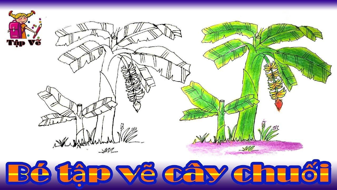 Bé tập vẽ cây chuối theo mẫu | drawing banana trees