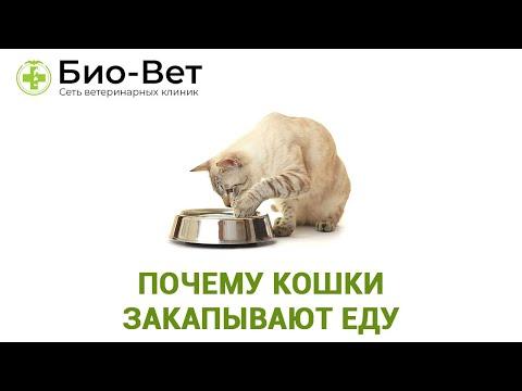 Почему кошки закапывают еду, что это значит?