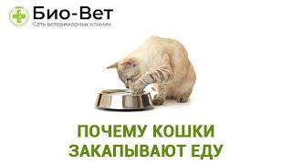 Почему кошки закапывают еду, что это значит ?
