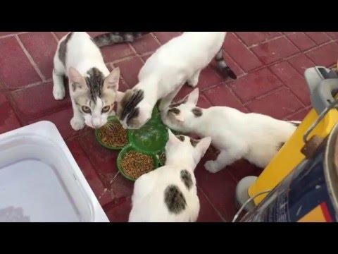 Hungry cats in Dubai