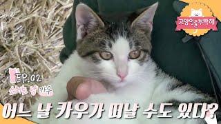 고양이를 부탁해 - 소 치는 카우냥이_#002