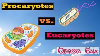 Procaryotes vs Eucaryotes - Odyssea Gaia - ep-01