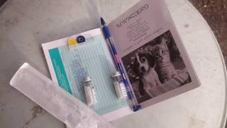 как правильно сделать прививку щенку самом
