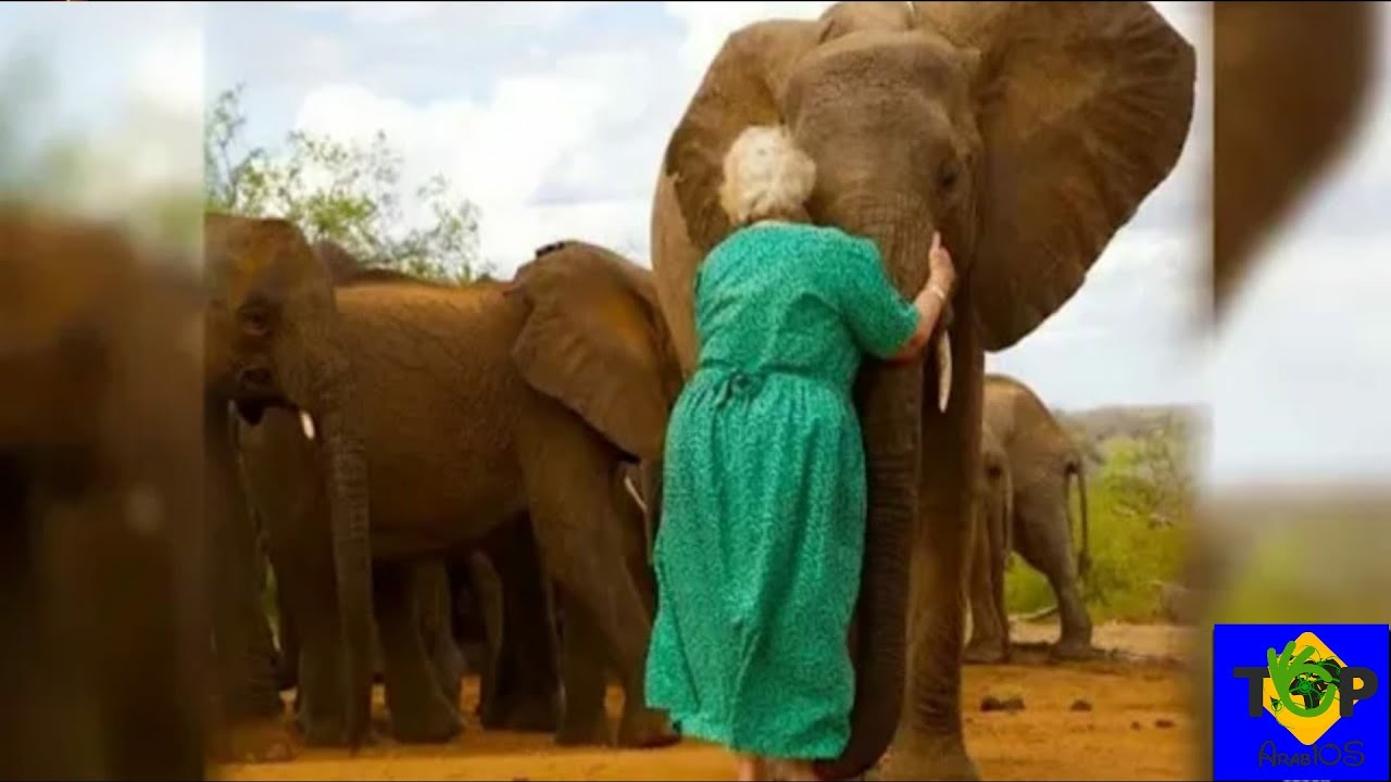 بعد أن اقتربت تلك السيدة من الفيلة، حدث ما لا يمكن توقعه!