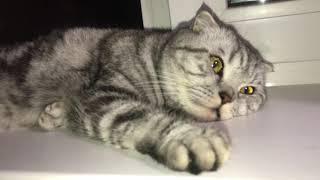Беременная кошка .20-23 день