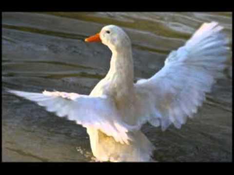 Gar chi mastem- o - kharabem cho( melody )