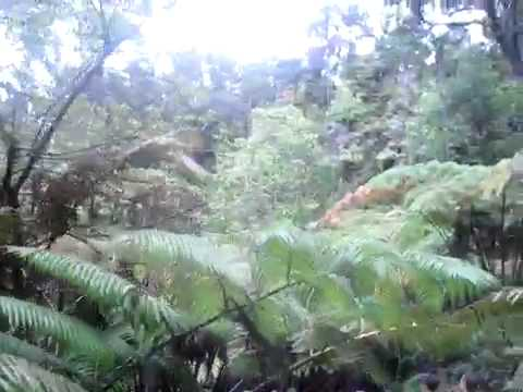 Tropical forest near the entrance to Thurston lava tube