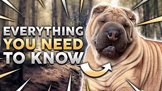 CHINESE SHAR PEI 101! Everything You Need To Know About Owning a Chinese Shar Pei Puppy