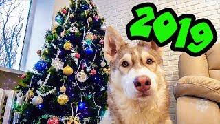 ЗДРАВСТВУЙ БУБЛИК НОВЫЙ ГОД (Хаски Бублик) Говорящая собака