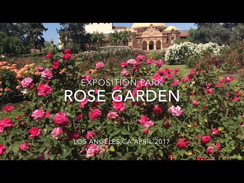 EXPOSITION PARK ROSE GARDEN IN LOS ANGELES VLOG 042917