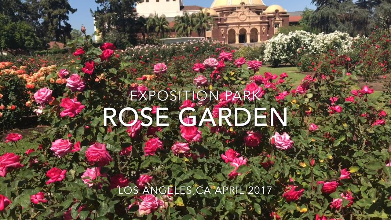 EXPOSITION PARK ROSE GARDEN IN LOS ANGELES VLOG 042917 - YouTube
