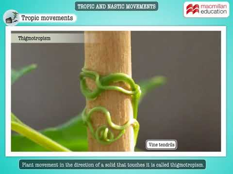Plant survival: the xeroscape garden | plants | uzinggo.
