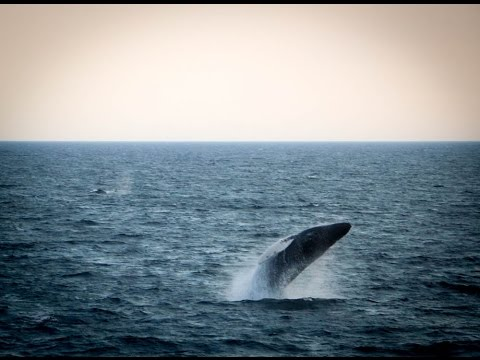 Cape Cod Whale Watching video