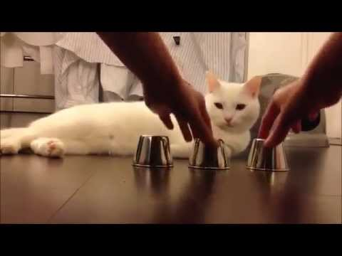 A very smart cat playing game, wow!