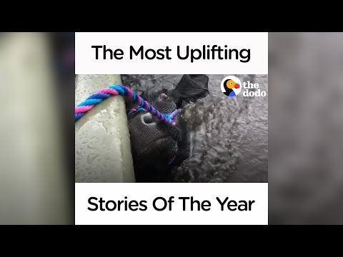 The Most Uplifting Stories Of The Year | The Dodo