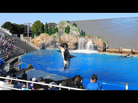 One Ocean Full Show SeaWorld San Diego Orca Encounter