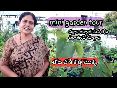 terrace garden tour