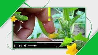 Сами с усами | Как подготовить огород к зиме