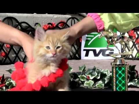 Derby Fun: TVG Hosts 'CATucky Derby' - Horse Racing News