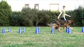 Cavaletti Training beim Sporthund