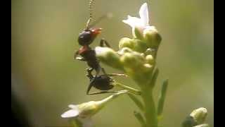 Муравьиная история The Ant story(Тест макронасадки Индустар-50., 2013-04-27T09:13:59.000Z)