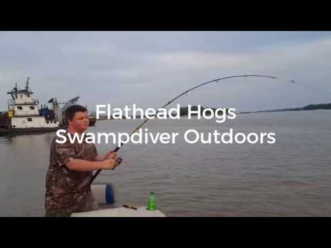 Big Ohio River Flathead cats