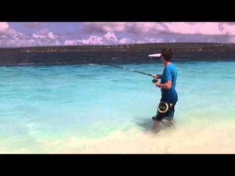 Catching a Bermuda chub real fast