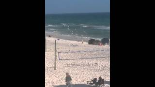 Video Little girl being attacked by seagulls download MP3, 3GP, MP4, WEBM, AVI, FLV November 2017