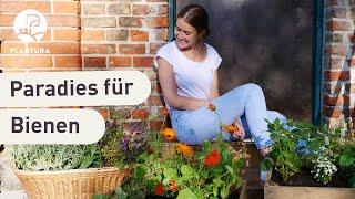Bienenfreundliche Blumenkästen (Anleitung & Ideen)