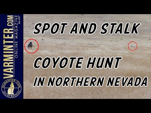 Spot And Stalk Coyote Hunt In Northern Nevada With The .22 Nosler