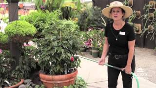 Gardening 101 Series | How to Water Baskets & Pots? with Dalia Brunner