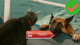 Funny Cats And Dogs - Funny Cats vs Dogs - Funny Animals Compilation |2018|