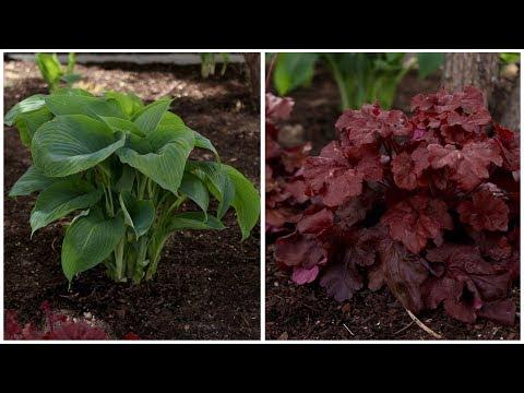 Planting a Few Shade-Loving Plants! 🌿🌥👌// Garden Answer