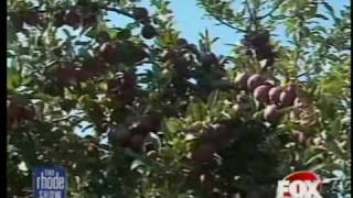 A Sweet Apple Crop in RI this Year