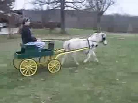 Miniature Buck Board Wagon For Saleminiature Horsecart Youtube