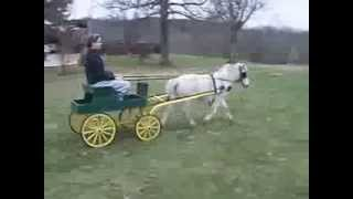 Miniature Buck Board Wagon For Sale..miniature Horse..cart..
