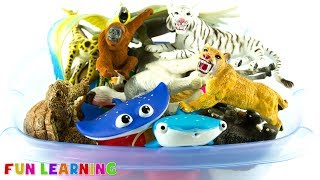 Wild Animal Learning For Kids with Fun Box of Educational Toys