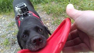 Action-Filme mit Hund - Action-Cam - Hunde Labrador