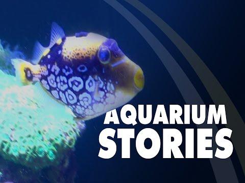 Aquarium Stories: Clown Trigger Health Progress With Hex-SHIELD