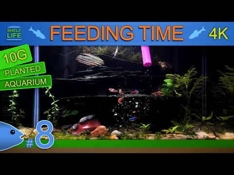handsome-fish-tank-at-feeding-time-|-10g-planted-aquarium-#8