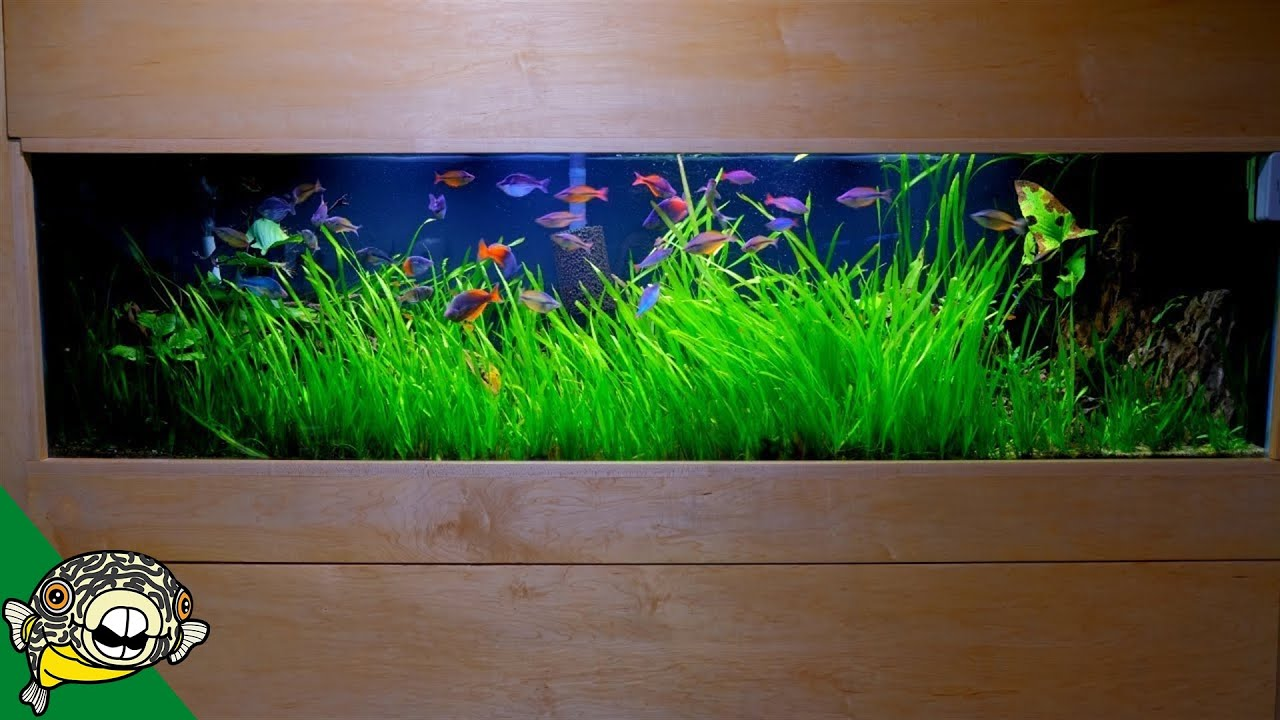 come-along-for-the-day-daily-dose-aquarium-co-op