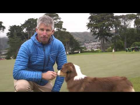 SUPERDOGS! Meet Calie The Red Tri Austailian Shepard at California Golf Club of San Francisco