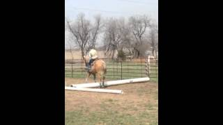 AQHA/PHBA 10 yo Gelding For Sale - Sweet Western Dream
