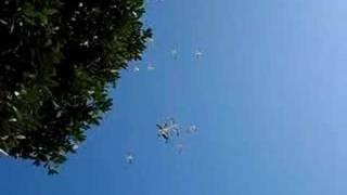 Seagulls Gliding in Air