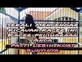 Terapi Kacer Cepat Semangat Rajin Bunyi  Mp3 - Mp4 Download