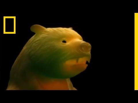 Giant Prehistoric Bear