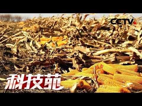"""《科技苑》乡村治污绿智慧 土里埋着""""金豆豆"""" 20190107CCTV农业"""