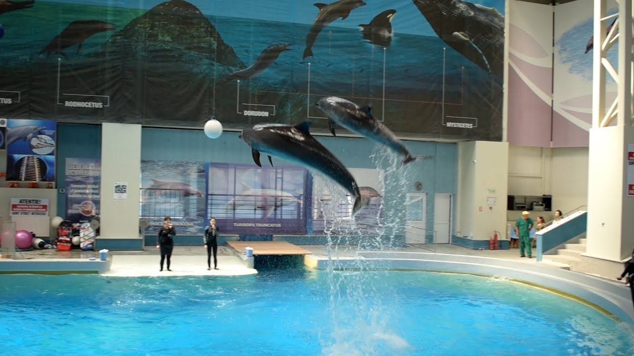 Delfinii fac spectacol la Delfinariul Constanța România