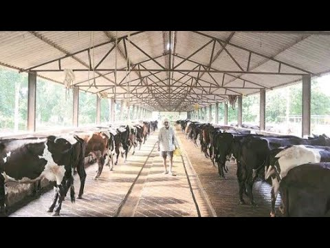 Arya Dairy Farm Dadupur Roran Karnal Live News By Ror Live News Channel